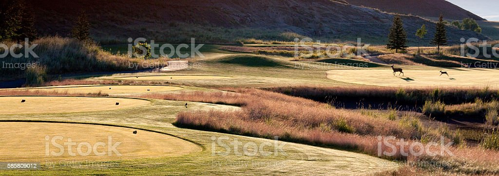 Beautiful Golf Course With Deer on the Great Plains stock photo