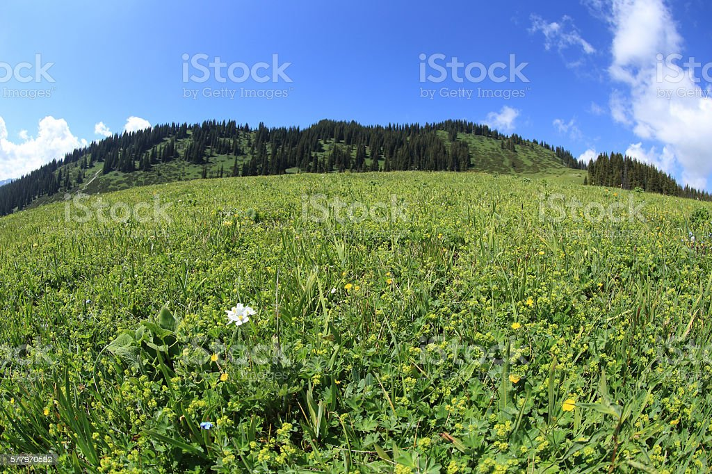 beautiful grass land on mountain top under blue sky stock photo