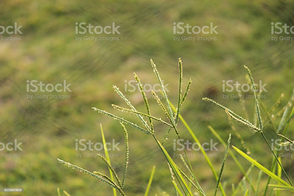 Beautiful Grass stock photo