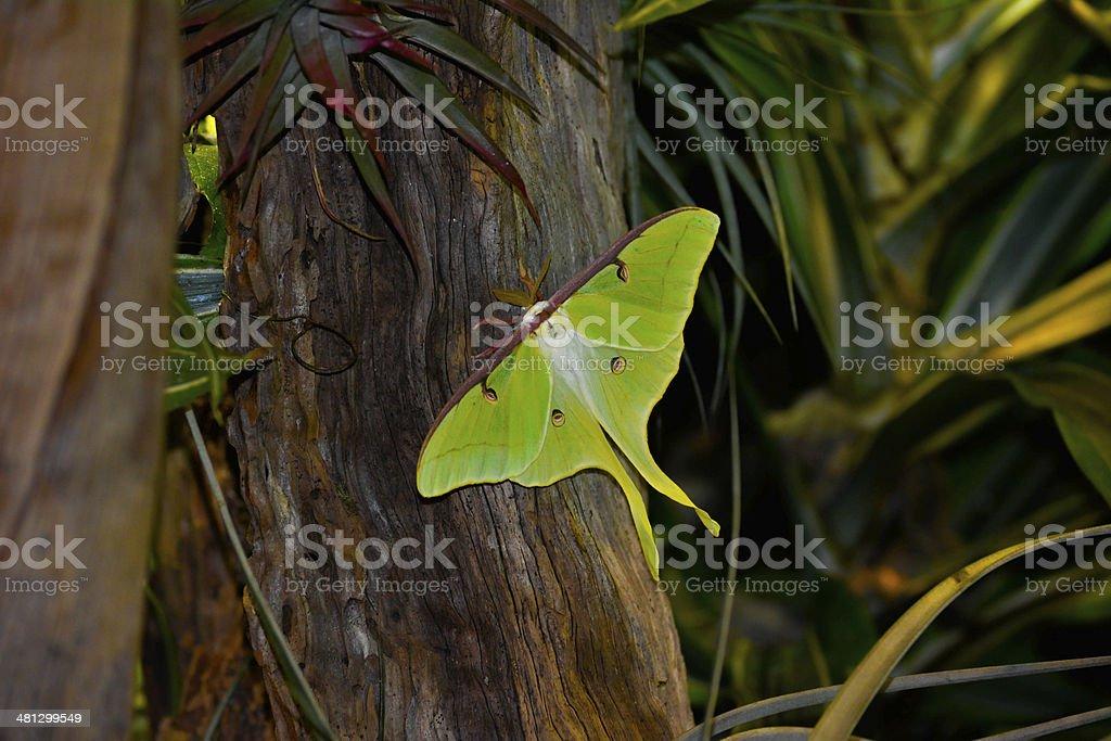 Beautiful Green Butterfly stock photo