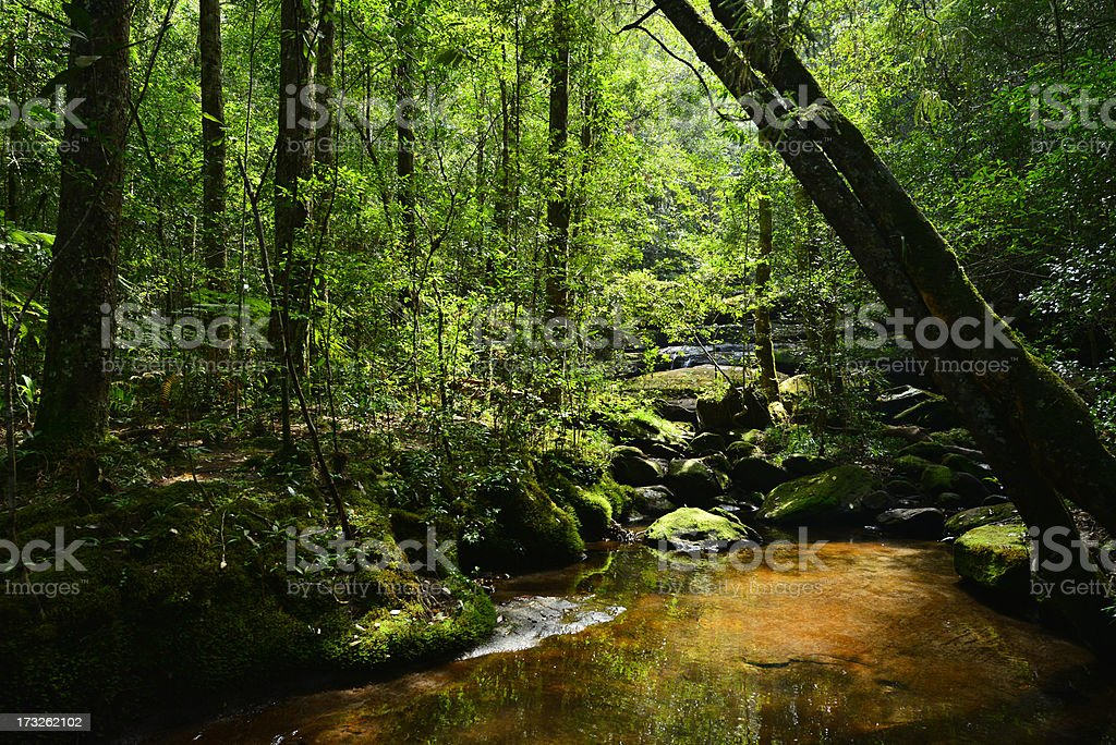 Beautiful green forest and water on summer Thailand. royalty-free stock photo