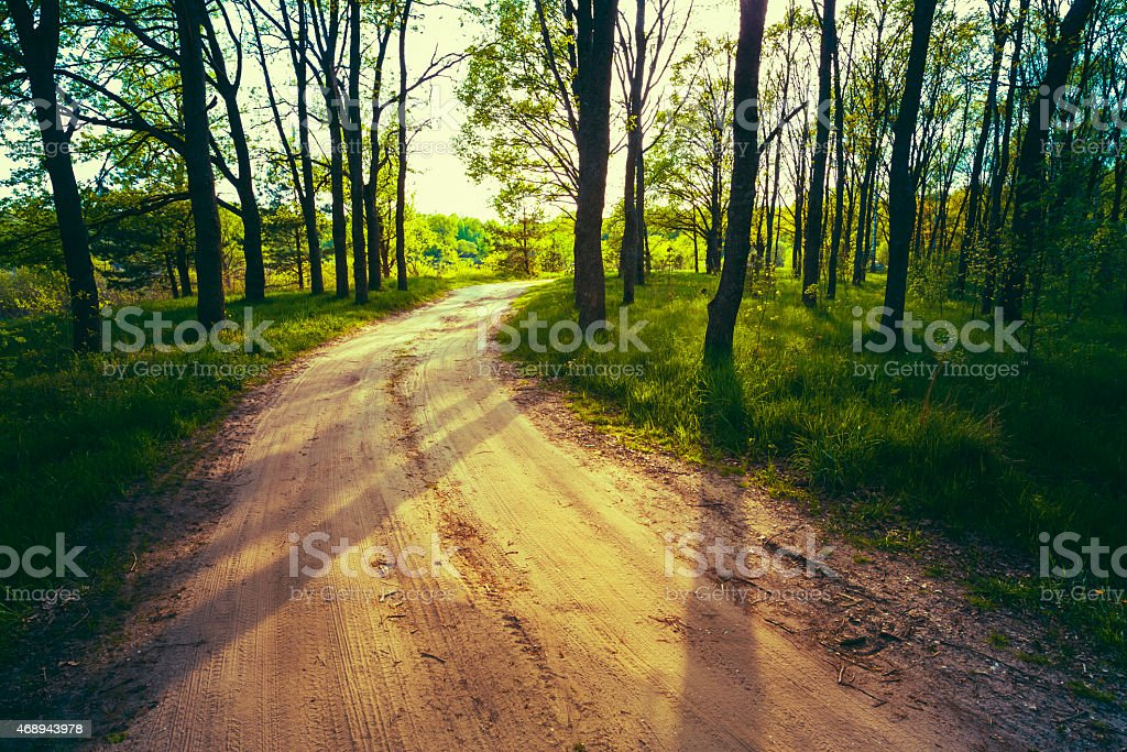 Beautiful Green Forest In Summer. Countryside Road, Path, Way, Lane,...