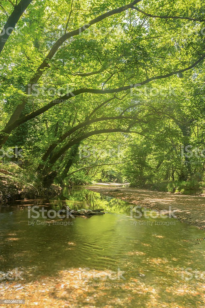 Beautiful green forest. stock photo