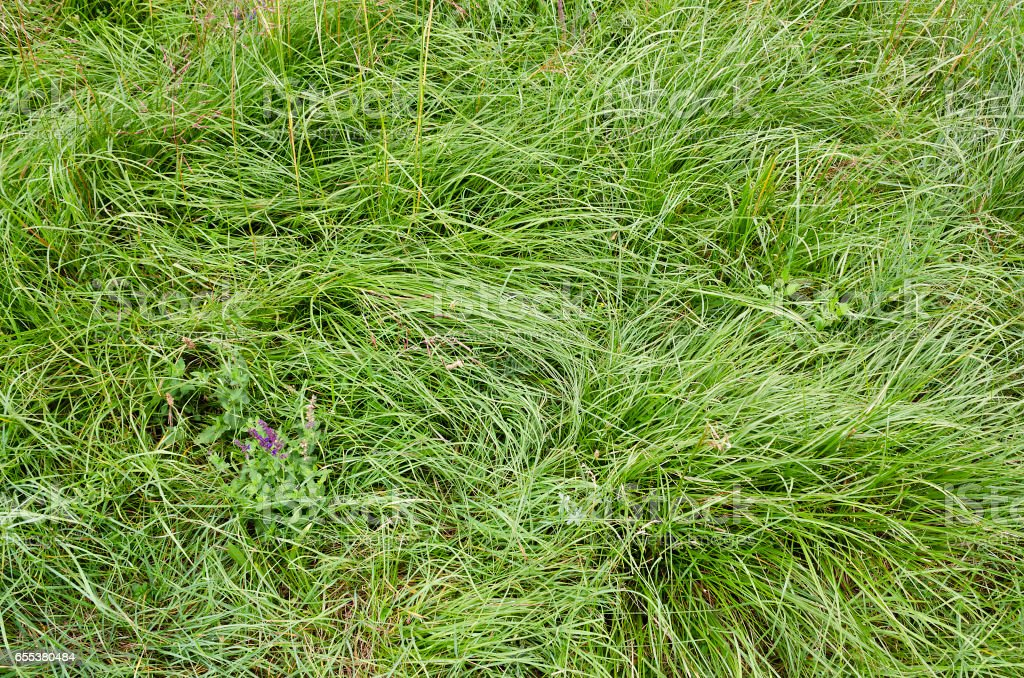 Beautiful green grass background in the nature stock photo