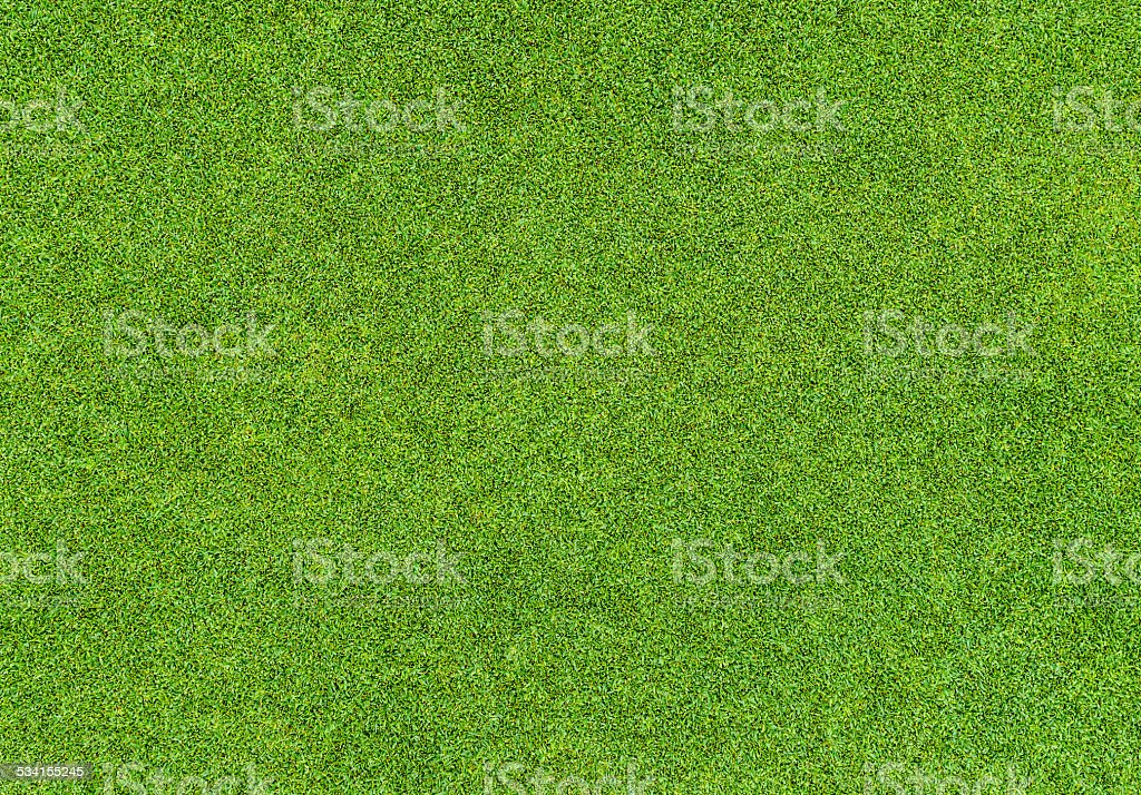 Beautiful green grass pattern from golf course stock photo