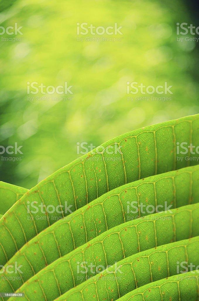 Beautiful green grass texture royalty-free stock photo