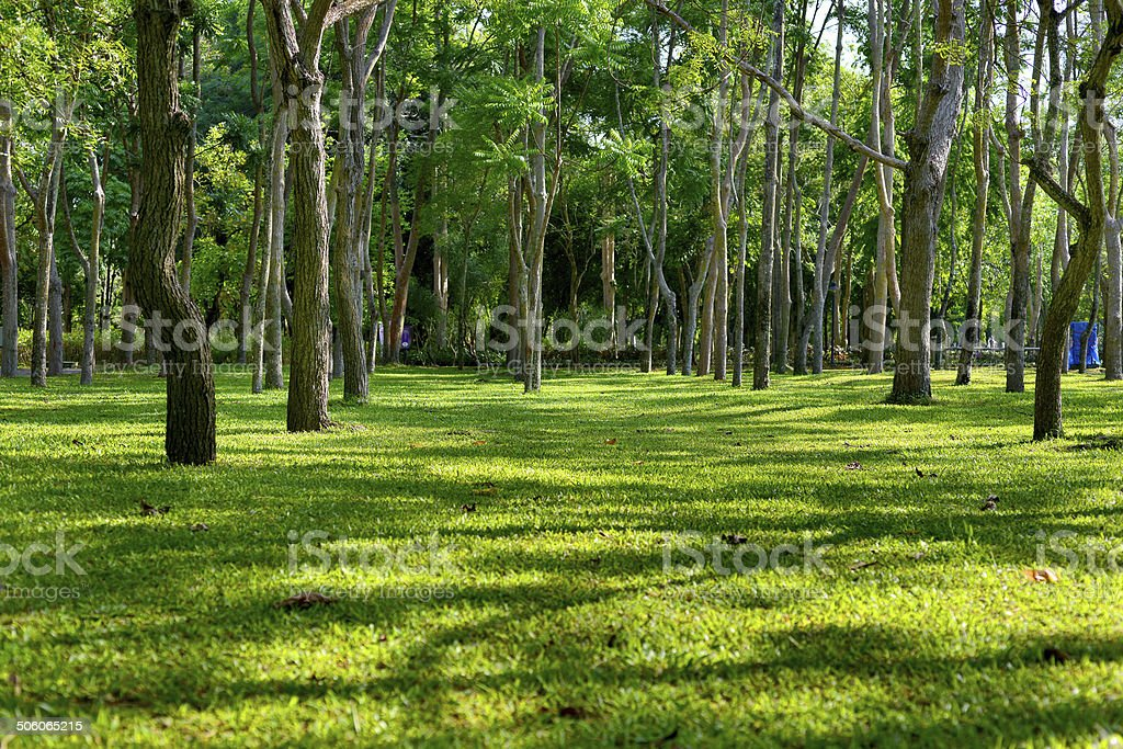 Beautiful green grassy area with shade trees in a park. stock photo