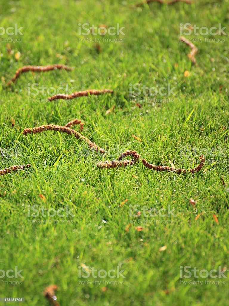 Beautiful green lawns perfectly cut for background royalty-free stock photo