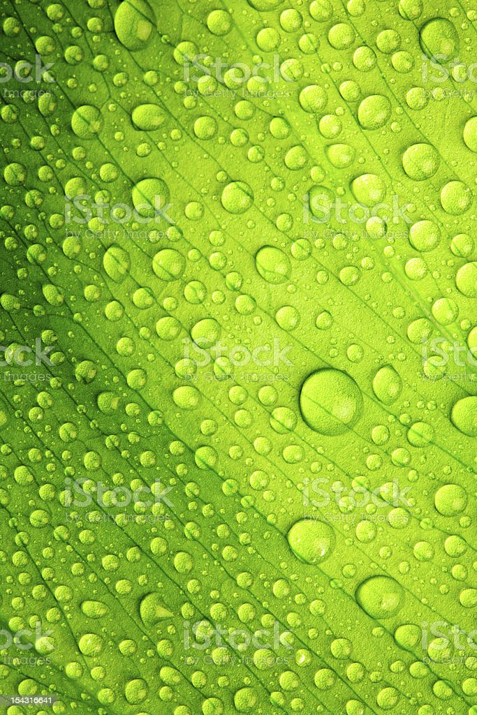 Beautiful green leaf stock photo