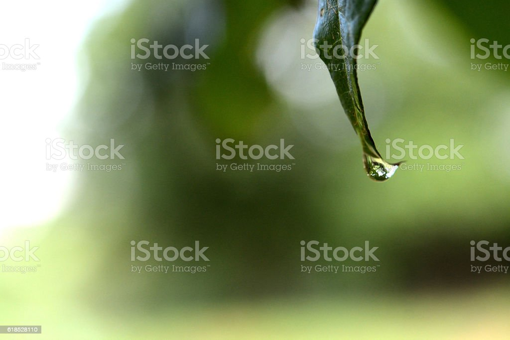 Beautiful green leaf with drops of water stock photo