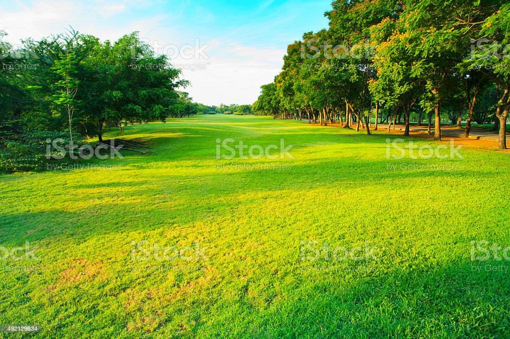 beautiful green park in morning light stock photo