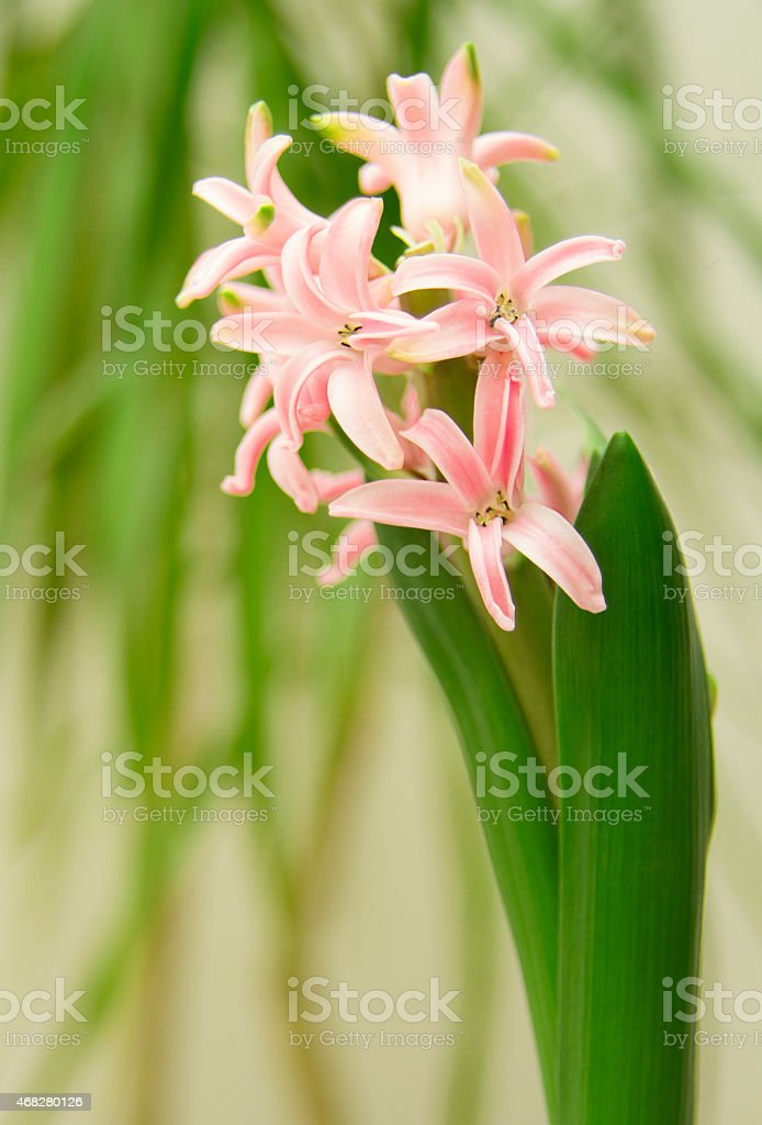 Beautiful green, pink flowers on green background stock photo