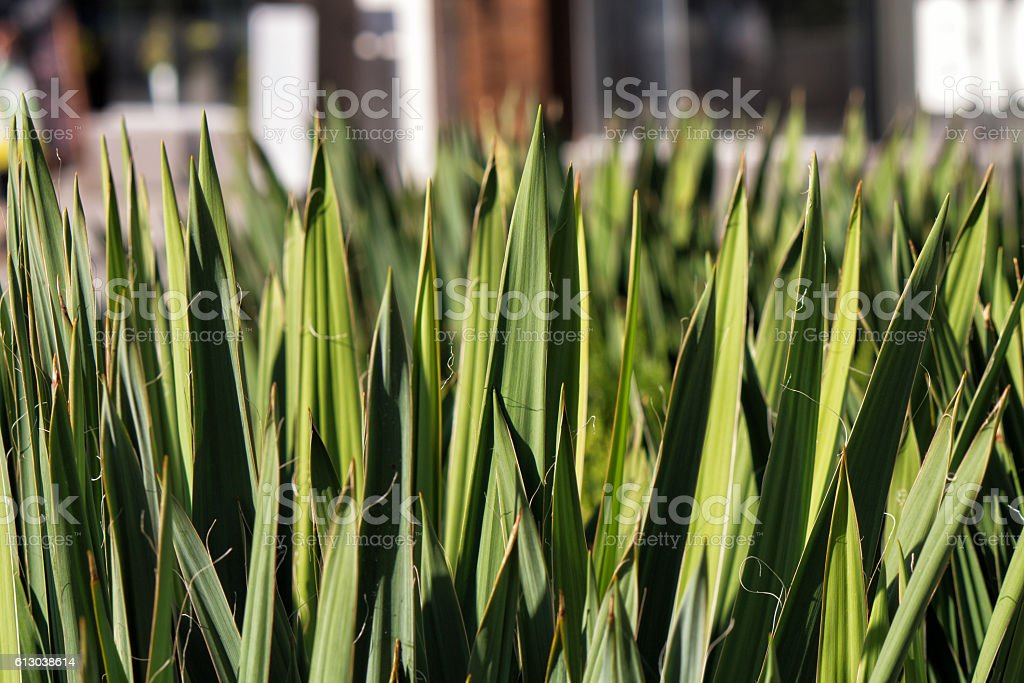 Beautiful green plant is growing stock photo