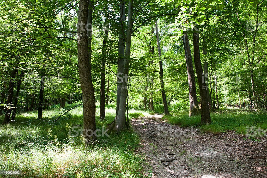 Beautiful green summer forest stock photo