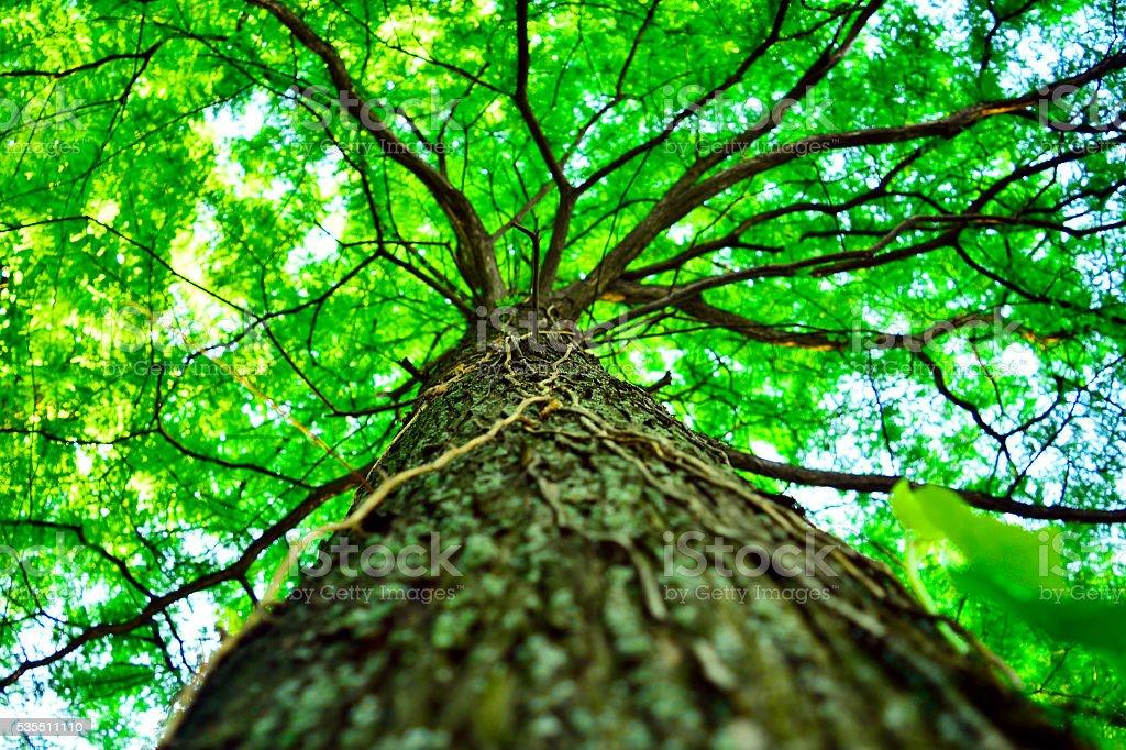 beautiful green tree, seen from below stock photo