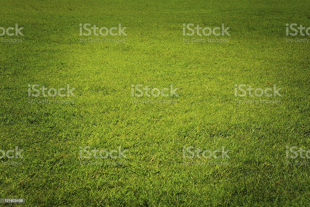 beautiful green well kept lawn royalty-free stock photo