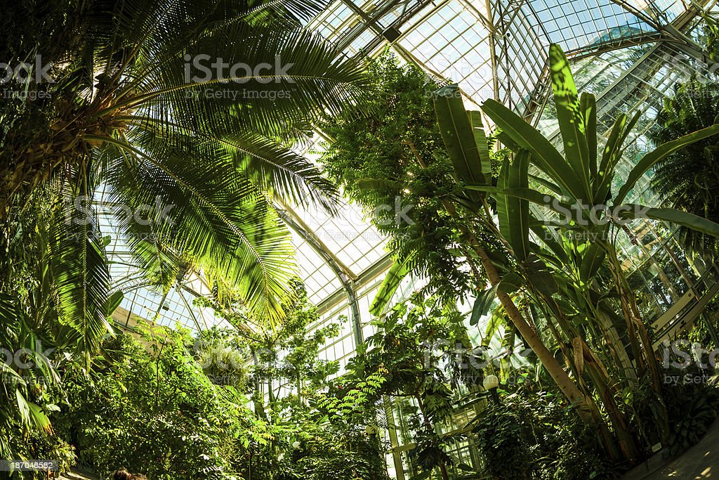 Beautiful Greenhouse Tropical Garden stock photo