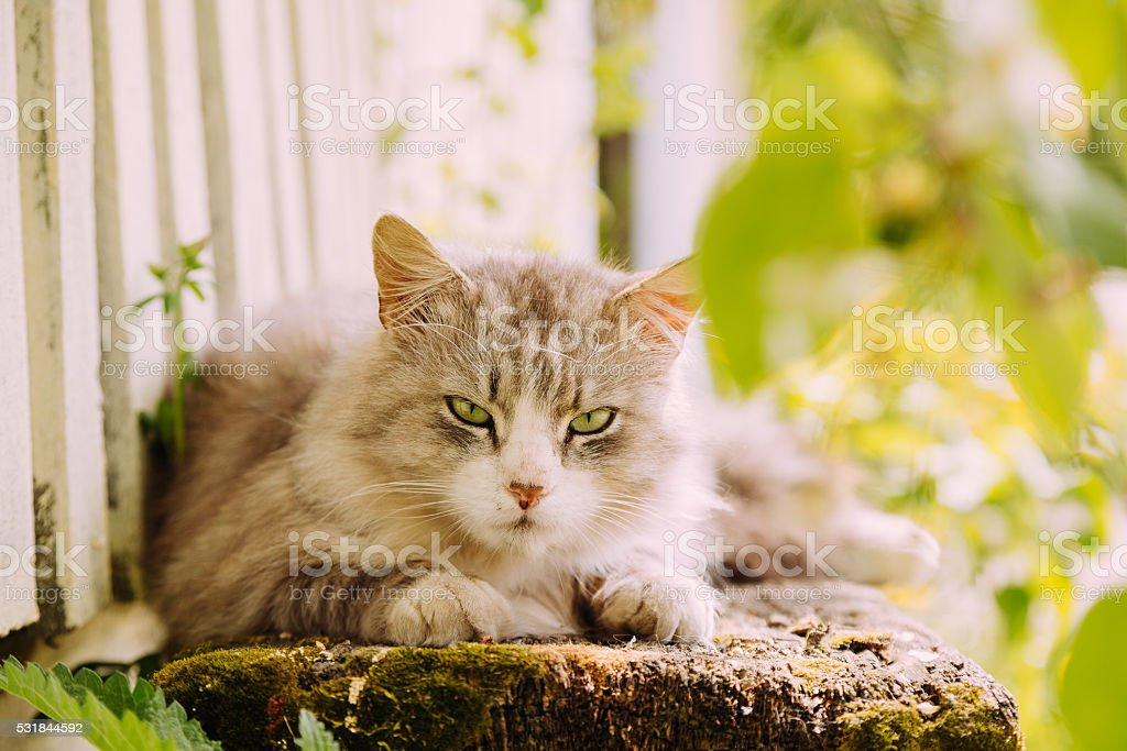 Beautiful grey cat lying on the bench outdoor stock photo