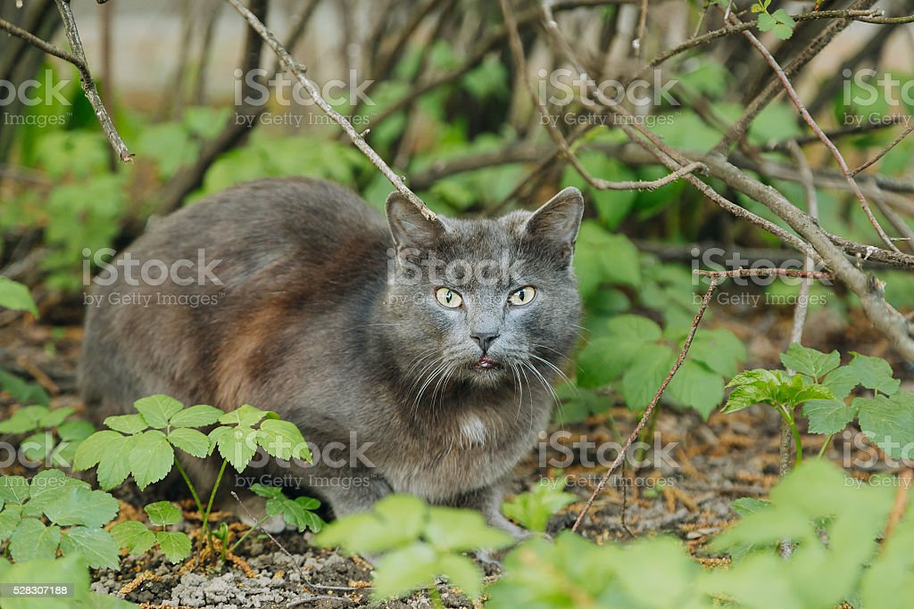 Beautiful grey cat sitting outdoor in summer stock photo