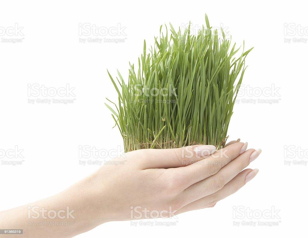 Beautiful growing grass royalty-free stock photo