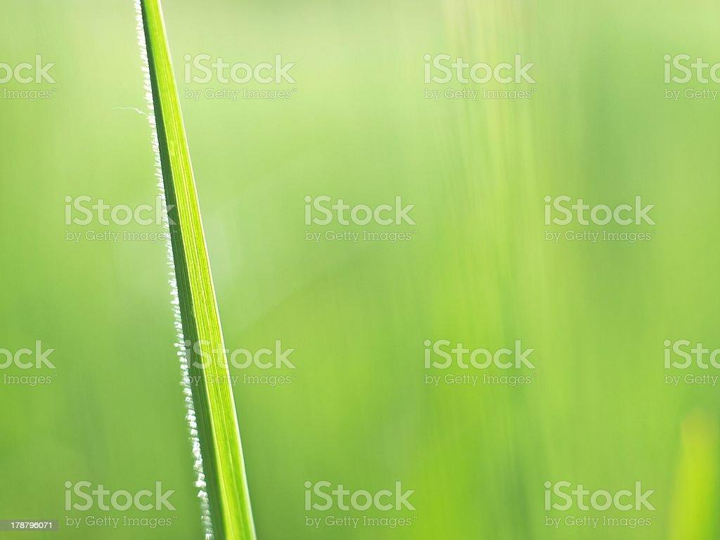 Schönes Haar auf Gras. Lizenzfreies stock-foto