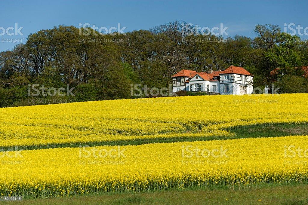 Beautiful half-timbered mansion behind canola field (XXL) royalty-free stock photo