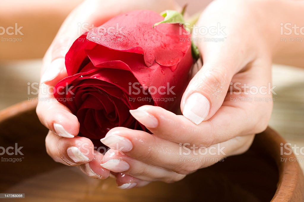 Beautiful hands with rose royalty-free stock photo