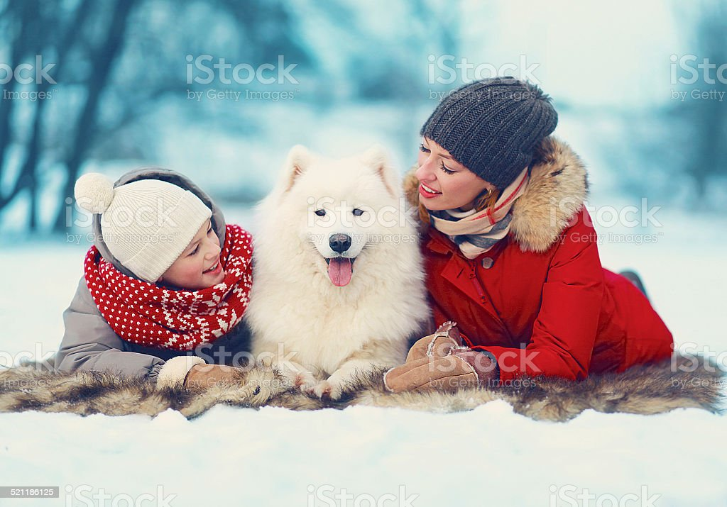 Beautiful happy family, mother and son walking with white Samoye stock photo