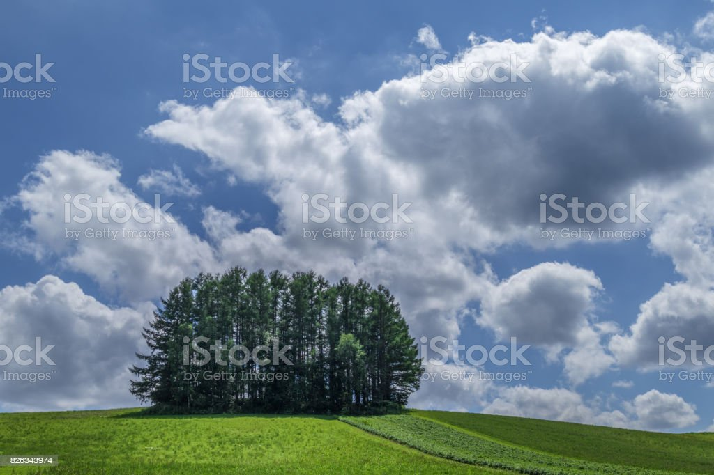 Beautiful hill of Biei in the summer stock photo