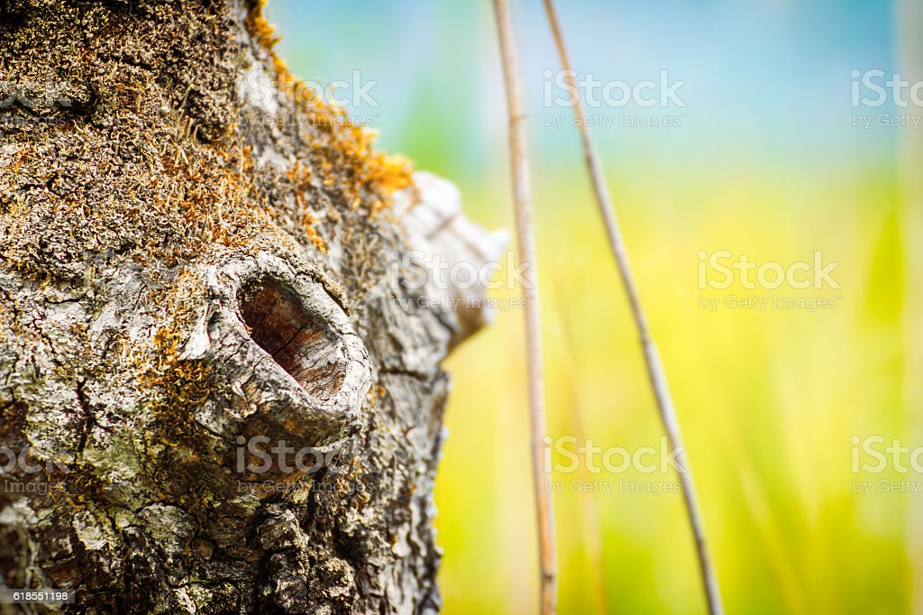 Beautiful hole from branch hollow focus on tree trunk bark stock photo