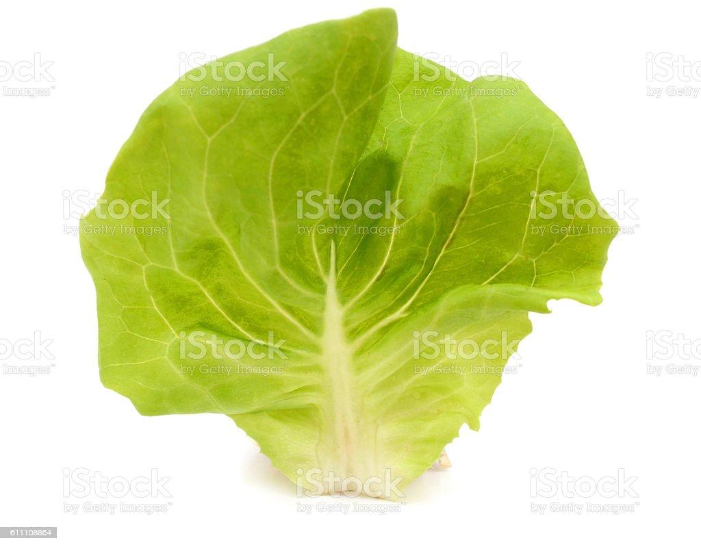 Beautiful Homegrown lettuce isolated on white background stock photo