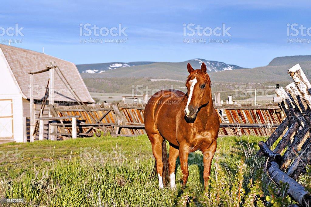 Beautiful Horse at Montana Ranch stock photo