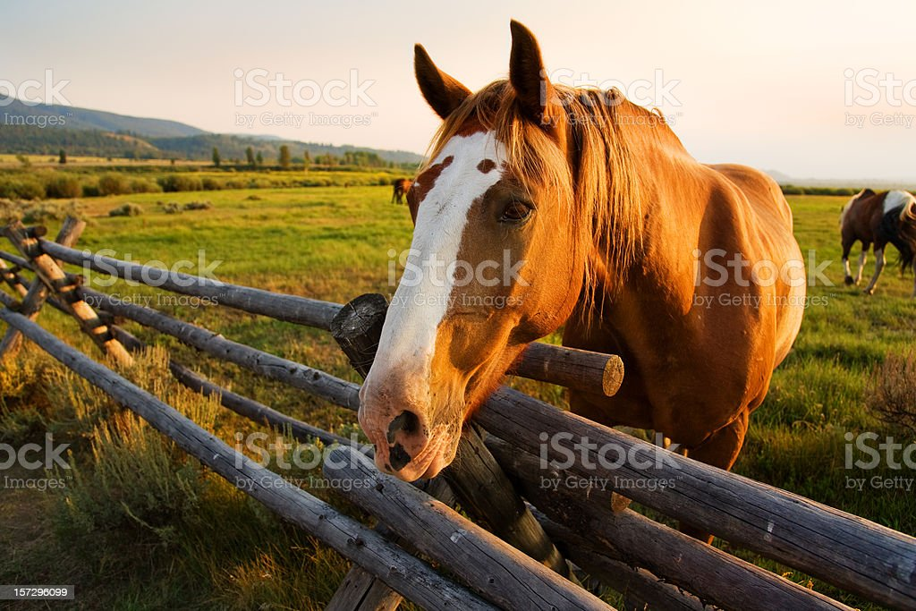 Beautiful Horse at Sunset stock photo