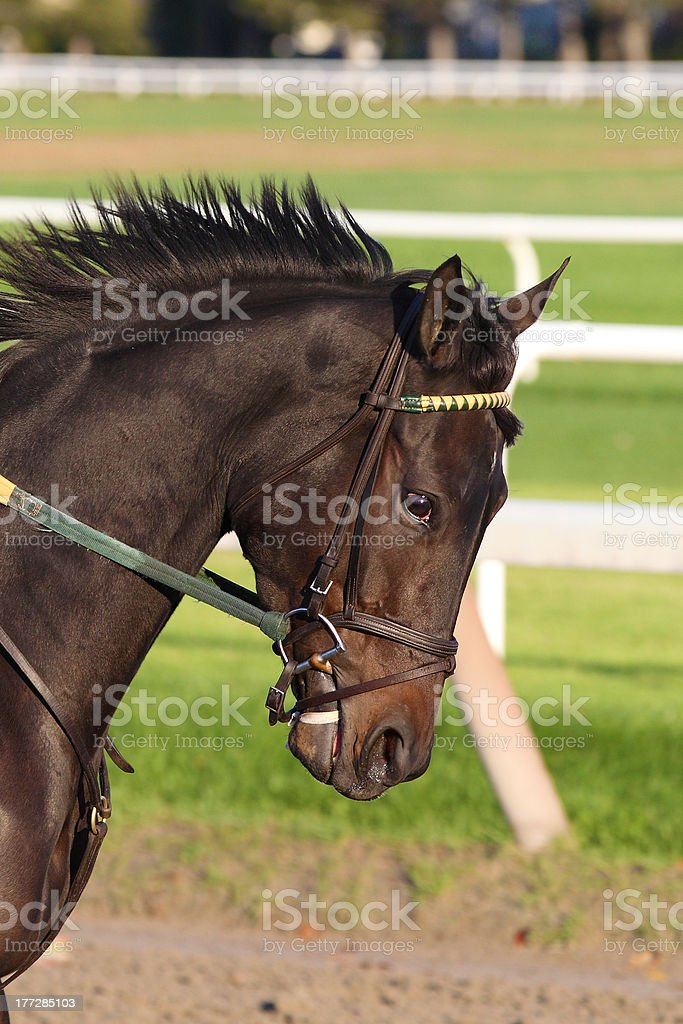 Beautiful horse closeup stock photo