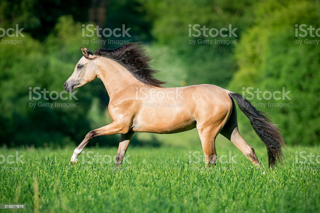 Beautiful  horse running in forest stock photo