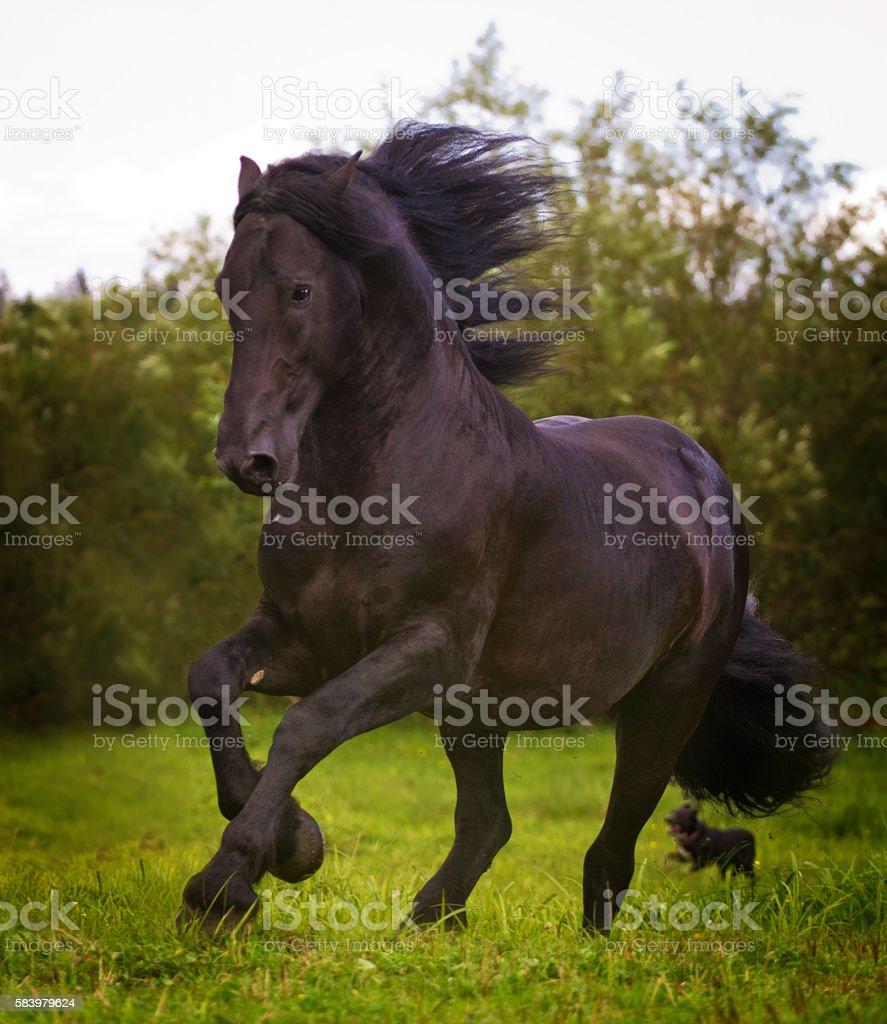 beautiful horse stallion running in wild nature stock photo