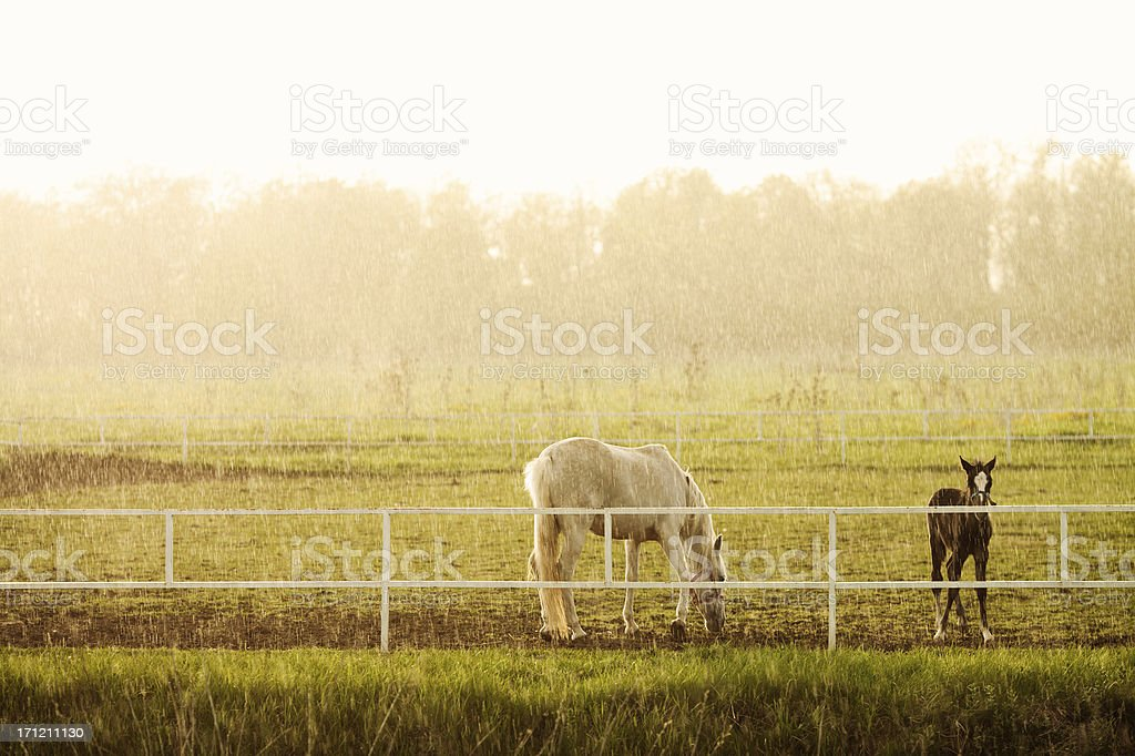 Beautiful horses on the pasture stock photo
