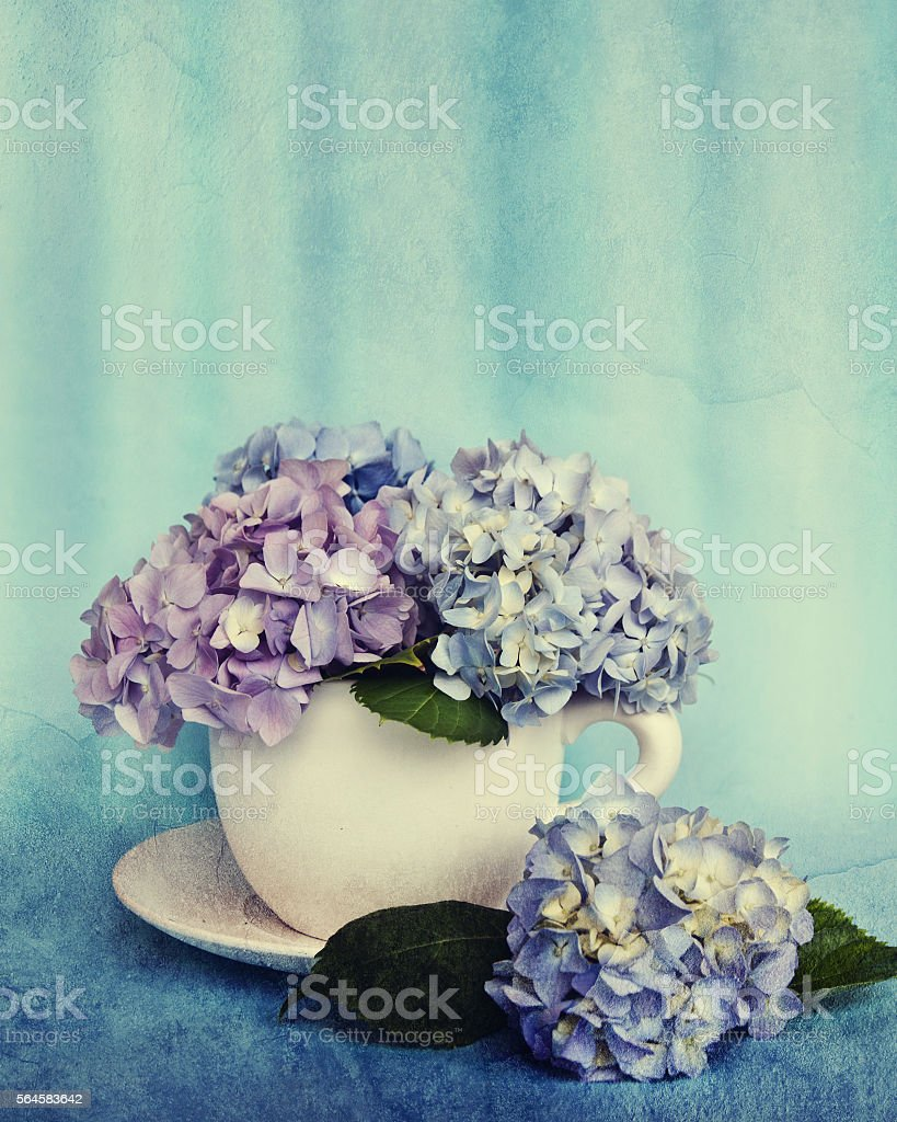 Beautiful  hydrangea flowers in a ceramic cup stock photo