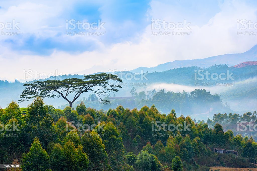 beautiful indian landscape with a trees and mountains stock photo