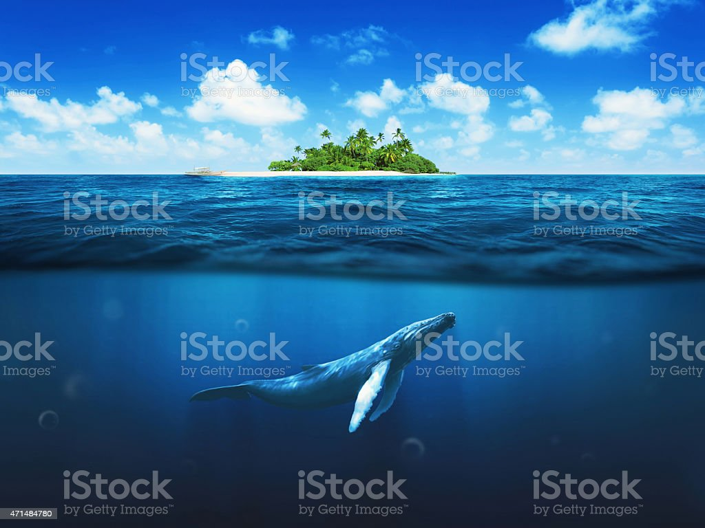 Beautiful island with palm trees. Whale underwater stock photo