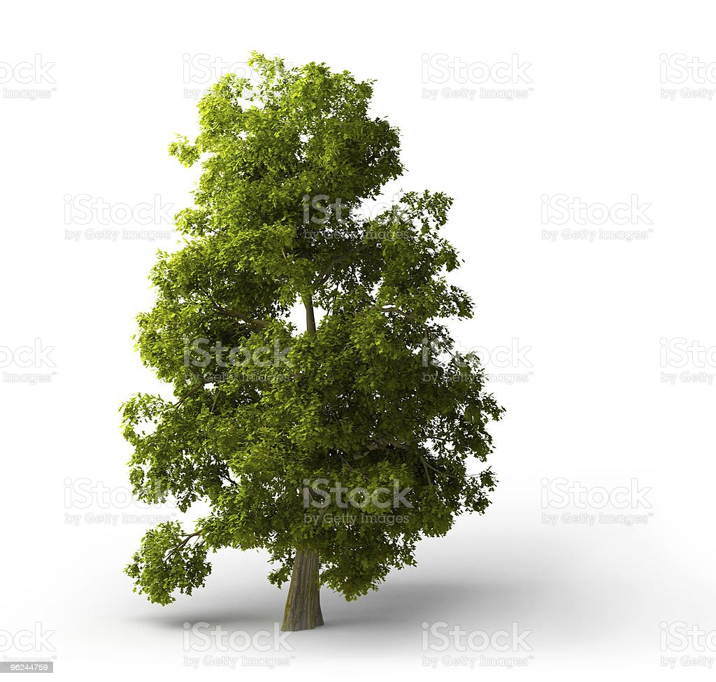 Beautiful Isolated green broadleaf tree with nice shadow stock photo