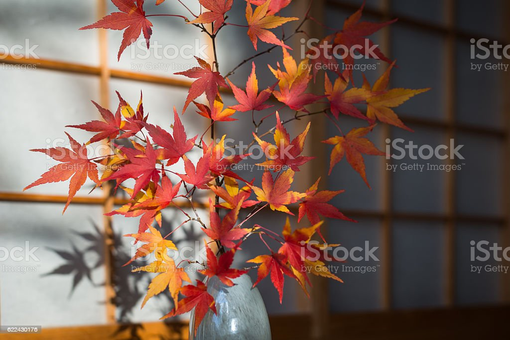 beautiful japanese maple in autum stock photo