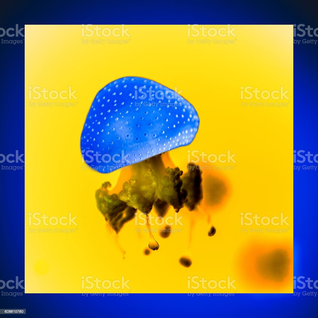 Beautiful Jellyfish Spotted Jellyfish (Phyllorhiza punctata) stock photo