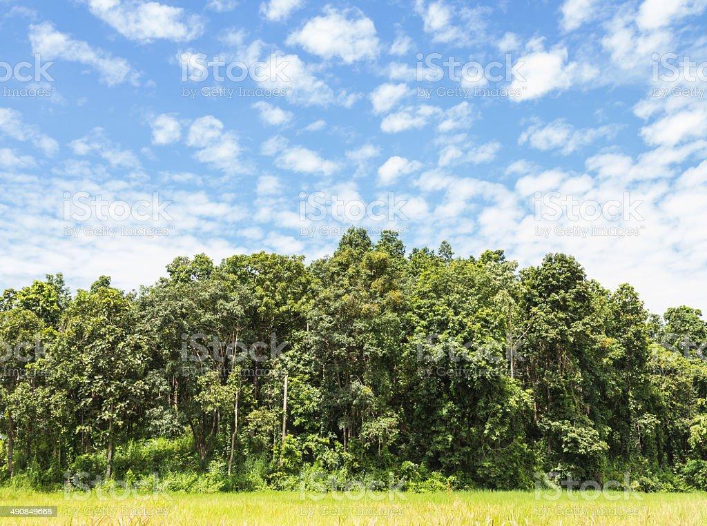 beautiful jungle and beautiful sky stock photo