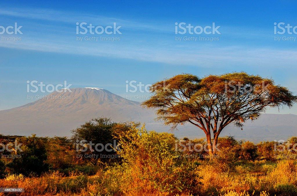Beautiful Kilimanjaro mountain after sunrise in morning, Kenya stock photo