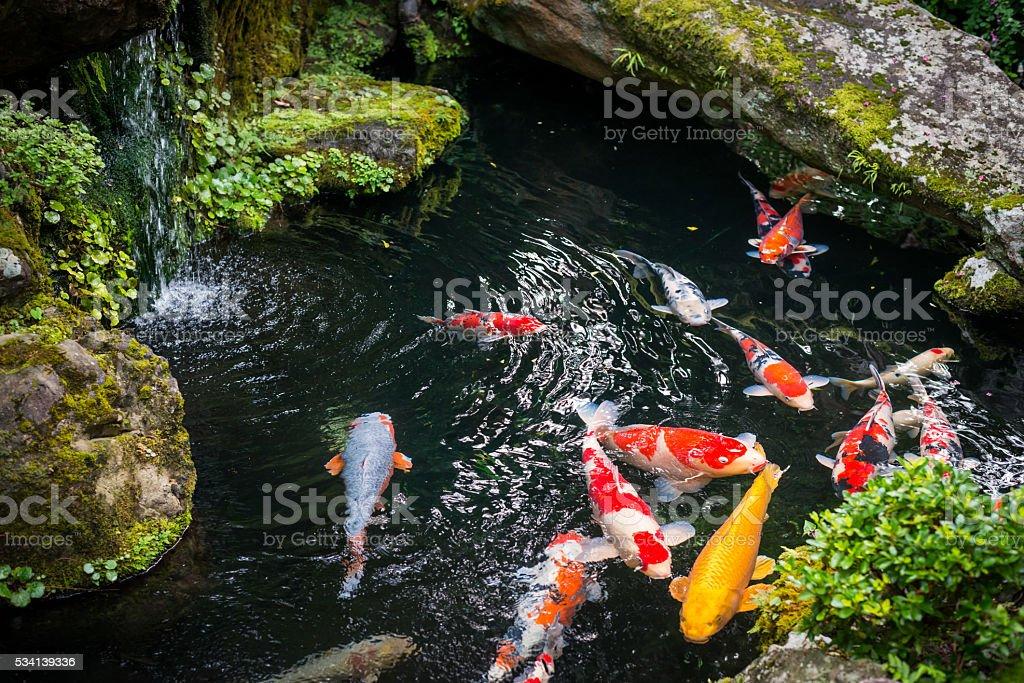 Beautiful Koi pond japan stock photo