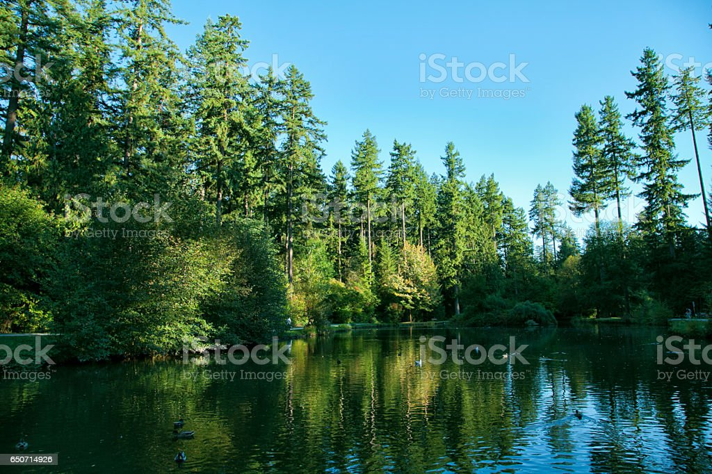 Beautiful lake in summer,Vancouver,Canada stock photo