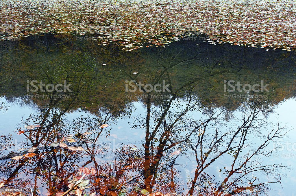 Beautiful lake in the autumn forest royalty-free stock photo
