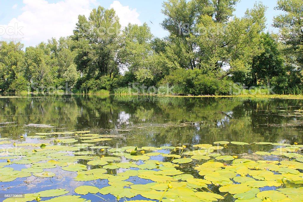 Beautiful lake on summer stock photo