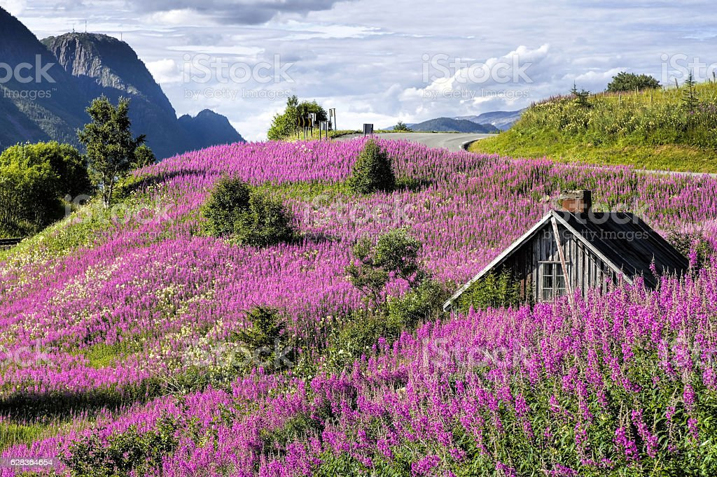 Beautiful landscape at Sognefjord in Norway stock photo